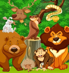 Wild animals in the park vector image