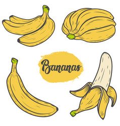 Set of colorful hand drawn banana design vector