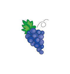 color grapes icon on a white vector image