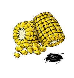Corn cob hand drawn vector