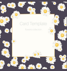 daisy chamomile floral card template vector image