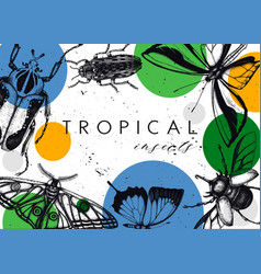 design with high detailed insects sketches hand vector image