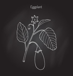 eggplant with leaves and flower vector image