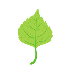 Linden tree green leaf vector