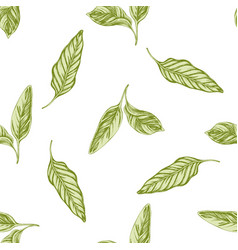 seamless pattern with hand drawn pastel calathea vector image