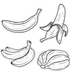 set of banana icons isolated on white background vector image