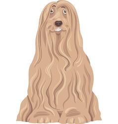 bearded collie dog cartoon vector image vector image