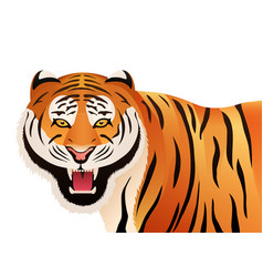 tiger on white background wild cat vector image