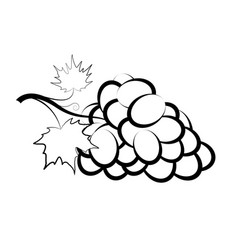 bunch grapes with leaves lying on table vector image
