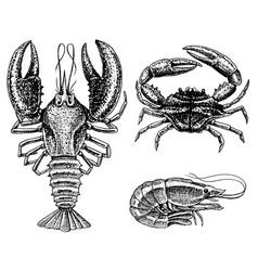 Crustaceans shrimp lobster or crayfish crab vector