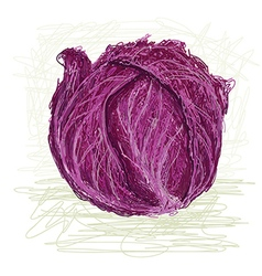 Red cabbage vector