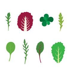 set salad greens mix salad leaves vector image