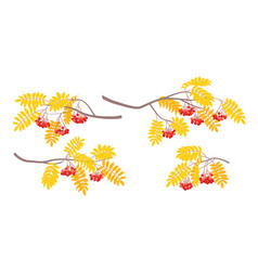 Simple autumn rowan branches with berries and vector