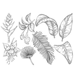 black and white tropical flowers and leaves set vector image