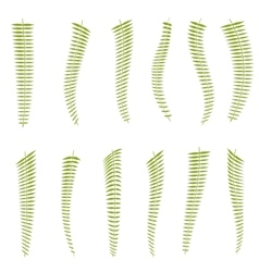 Fern leaves Set vector