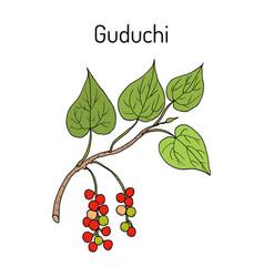 Guduchi transport ayurvedic medicinal vector