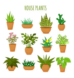 Indoor house green plants and flowers isolated vector