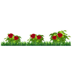 isolated rose plant for decore vector image