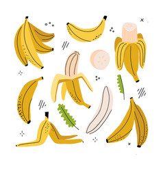 banana slice peeled peel vector image