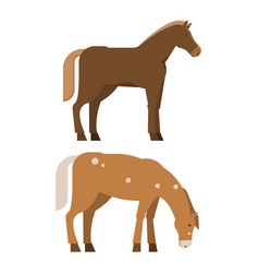 Chestnut horses in different poses vector