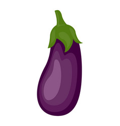 colorful eggplant isolated on vector image