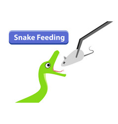 green snake feeding with raw rat in art vector image