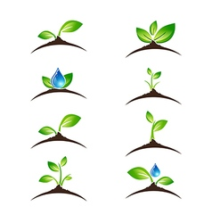 Green Sprout Set vector image