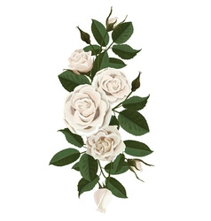White roses flowers buds and leaves vector image vector image