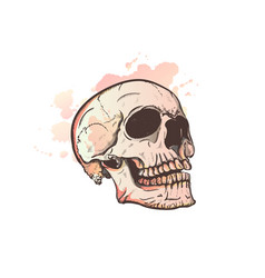 skull and watercolor blots vector image vector image