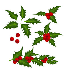 christmas elements with set of holly leaves and vector image