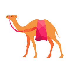 indian camel isolated on white vector image