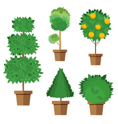 set of street trees and shrubs in pots vector image vector image