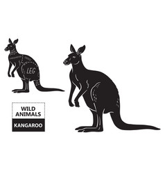 cut of kangaroo set poster butcher diagram vector image