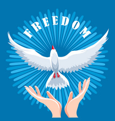 human hands let go dove in air freedom vector image