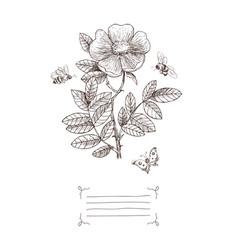 Vintage botanical blossom flower vector