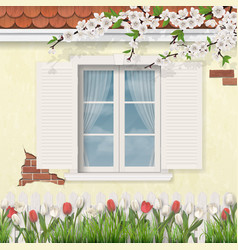 spring old facade wooden window branch tulips vector image vector image