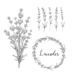 Botanical bundle vector