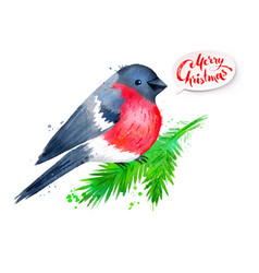 christmas watercolor of bullfinch vector image