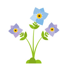 Pansy flower plant nature vector