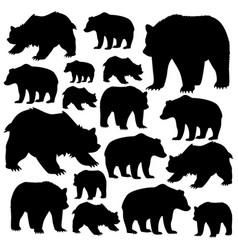 Wild bears vector