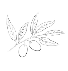 Hand drawn olive branch vector image vector image
