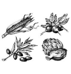 Vegetables set isolated drawings black over white vector image vector image