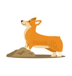 happy cute corgi dog icon vector image vector image