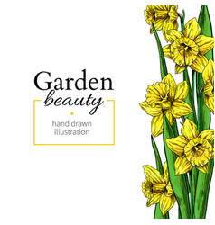 Daffodil flower and leaves border drawing vector