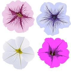 Set of four petunia flowers vector