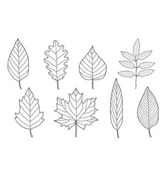 Set of hand drawn leaves vector