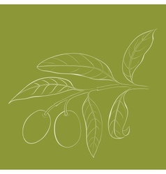 Two olives on branch with leaves isolated on green vector