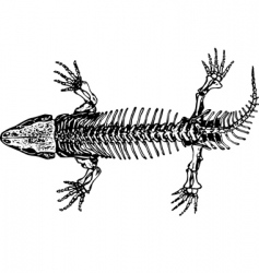 Skeleton of seymouria vector