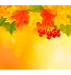Autumn background with leaves and rowan Back to vector image