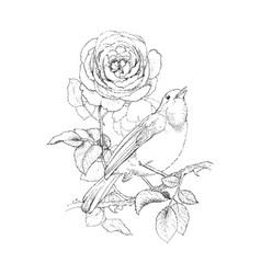 rose and little bird vintage hand drawn vector image vector image